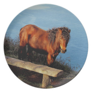 South Devon Coast Dartmoor Pony Near Bench .2. Plate