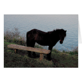 South Devon Coast Dartmoor Pony Near Bench .3. Card