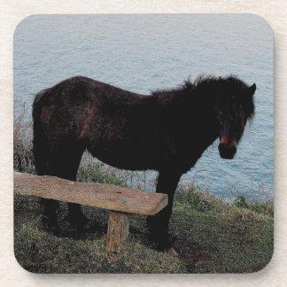 South Devon Coast Dartmoor Pony Near Bench .3. Coaster