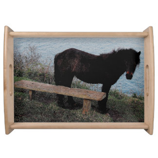South Devon Coast Dartmoor Pony Near Bench . 3 Serving Tray