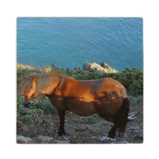 South Devon Coast Dartmoor Pony on Summer Evening Wood Coaster
