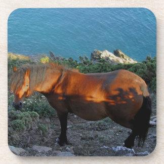 South Devon Coast Dartmoor Pony Summer Evening Coaster