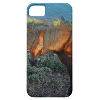 South Devon Coast Dartmoor Pony Summer Evening iPhone 5 Cover