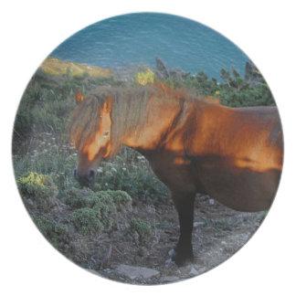 South Devon Coast Dartmoor Pony Summer Evening Plate