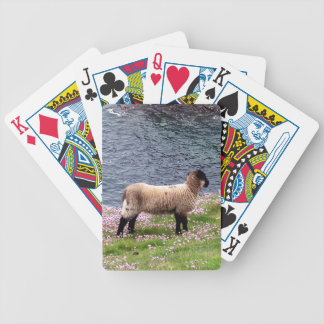 South Devon Coast Lamb Standing In Pinks Bicycle Playing Cards