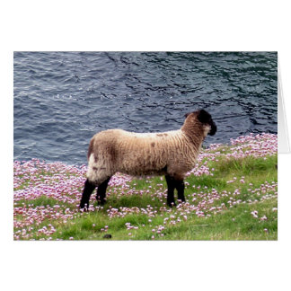 South Devon Coast Lamb Standing In Pinks Card
