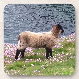 South Devon Coast Lamb Standing In Pinks Coaster