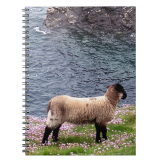 South Devon Coast Lamb Standing In Pinks Notebooks
