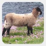 South Devon Coast Lamb Standing In Pinks Square Sticker
