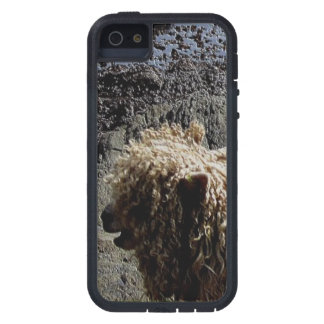 South Devon Coast Long Wool Sheep On Rocks iPhone 5 Case