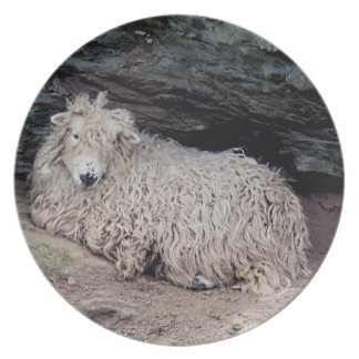 South Devon Coast Long Wool Sheep Sheltering Plate