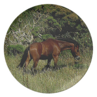 South Devon Coast Path Dartmoor Pony Grazeing .2. Plate