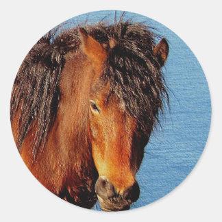 South Devon Coast Path Dartmoor Pony Looking Classic Round Sticker