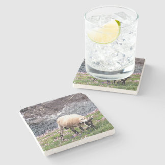 South Devon Coast Sheep Grazing In Pinks Stone Coaster