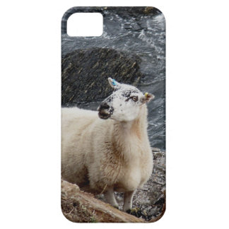 South Devon Coast Sheep On Rocks Looking Barely There iPhone 5 Case