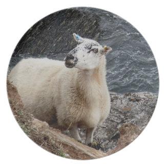 South Devon Coast Sheep On Rocks Looking Plate