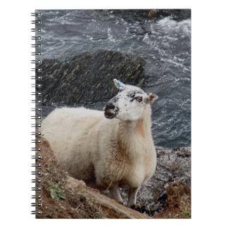 South Devon Coast Sheep On Rocks Looking Spiral Notebook