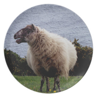 South Devon Coast Sheep Standing Looking Plate