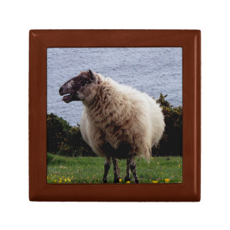 South Devon Coast Sheep Standing Looking Small Square Gift Box