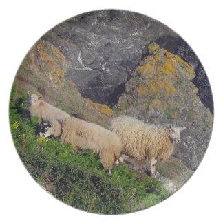 South Devon Coast Three Sheep Grazeing On Rocks Plate