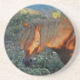 South Devon Coastline Dartmoor Pony Summer Evening Coaster