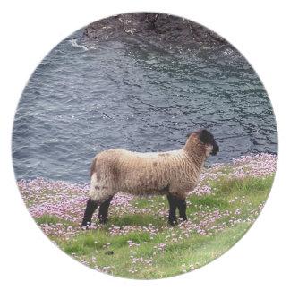 South Devon Coastline Lamb Standing In Pinks Plate