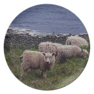 South Devon Coastline Long Wool Sheep Grazeing Plate