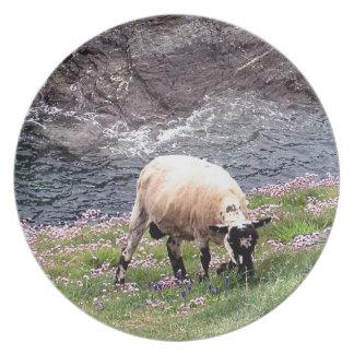 South Devon Coastline Sheep Grazeing In Pinks Plate