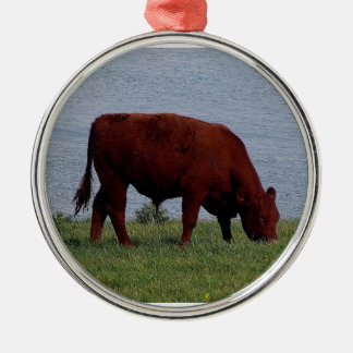 South Devon cow on remote coastline Christmas Ornament