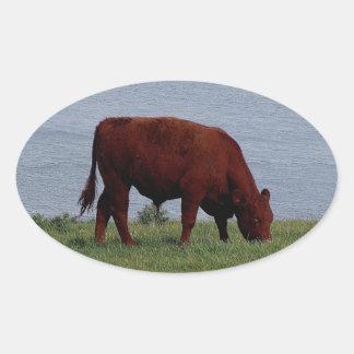 South Devon cow on remote coastline Oval Stickers