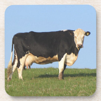 South Devon Cow Standng Hill Top Looking Coaster