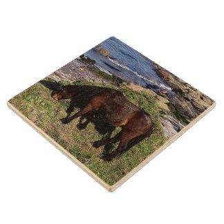 South Devon Dartmoor Pony Grazing Near Beach Wood Coaster