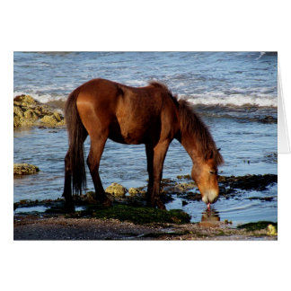 South Devon Dartmoor Pony Licking Sea Water Greeting Card