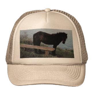 South Devon Dartmoor Pony Near Bench.3. Cap