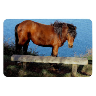 South Devon Dartmoor Pony On Remote Coast Path Magnet