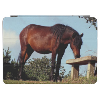 South Devon Dartmoor Pony Sniffing Bench iPad Air Cover