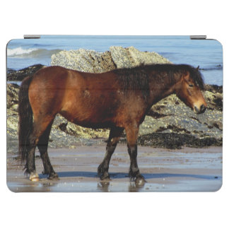 South Devon Dartmoor Pony Walking On Beach iPad Air Cover
