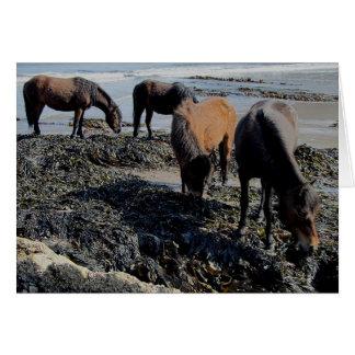 South Devon  Four Dartmoor Ponies Eating Seaweed Card