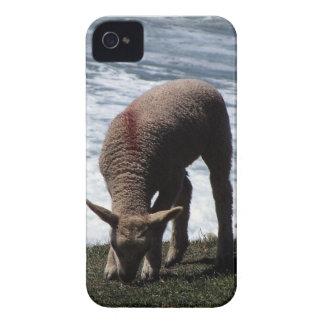 South Devon Lamb Grazeing On Wild Coastline. iPhone 4 Case-Mate Case