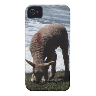 South Devon Lamb Grazeing On Wild Coastline. iPhone 4 Cover