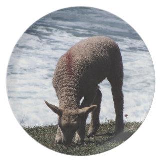 South Devon Lamb Grazeing On Wild Coastline Plate