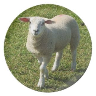 South Devon Lamb Looking At Me With Interest Plate