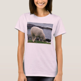 South Devon Lamb On Wild Remote Coastline T-Shirt