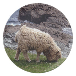 South Devon Long Wool Lamb Grazeing On Coastline Plate