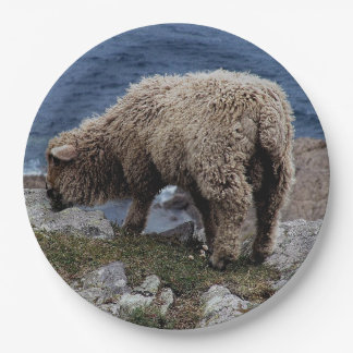 South Devon Long Wool Sheep Lamb Grazing On Coast Paper Plate