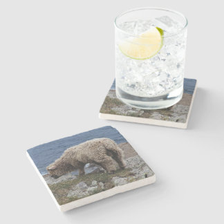 South Devon Long Wool Sheep Lamb Grazing On Coast Stone Coaster