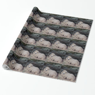 South Devon Long Wool Sheep Sheltering Wrapping Paper