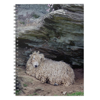 South Devon Longwool Sheep Sheltering Notebooks