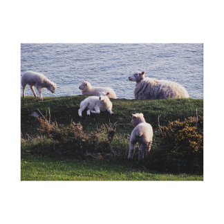 South Devon Remote Coastline Sheep And Lambs Canvas Print