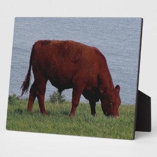 South Devon Ruby Red Cow Grazeing On Coastline Plaque
